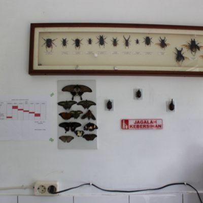 taman kupu-kupu 2